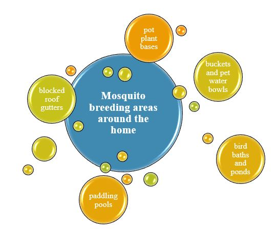 Mosquito Breeding areas